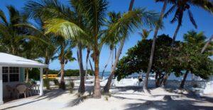 LIVEcam Islamorada webcam Pines and Palms