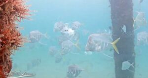 LIVE Webcam Underwater Camera in Deerfield Beach livecam Florida